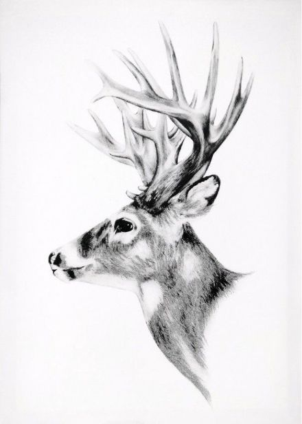 Grey Stag Canvas Wall Art with Silver Glitter 40 X 50cm